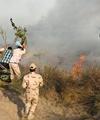 خطر روزافزون آتش، جنگلها را تهدید میکند