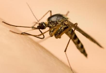 اولین واکسن مالاریا در جهان تایید شد