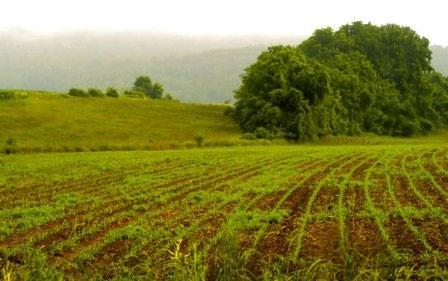 سم غیرمجاز د.د.ت هنوز در برخی مزارع کشاورزی استفاده میشود