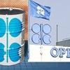 کاهش مجدد قیمت نفت اوپک