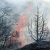 آتشسوزی بخشی از جنگلهای حاشیه رود ارس در پارس آباد