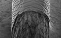 کشف عامل خاکستری شدن موی انسان