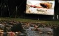 دیدن فیلم کلاسیک آروارهها روی آب