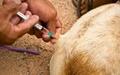 فراخوان واکسیناسیون گروهی برای ریشهکنی جهانی هاری