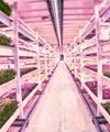 راهاندازی اولین مزرعه زیرزمینی جهان در لندن