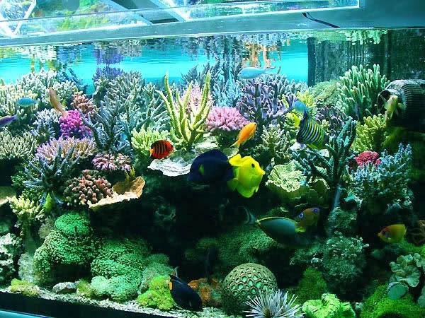مرجانهای آکواریوم سمی و عامل انتقال عفونت به انسان است