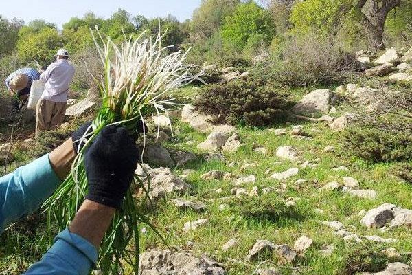 ظرفیت بالای ایران برای فعالیت دانش بنیان در گیاهان دارویی