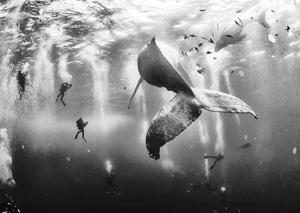 معرفی برترینهای رقابت عکاسی ۲۰۱۵