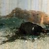 ادعای زندهبودن مقتول در پرونده جنایت آتشین
