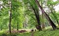 درمان همه جنگلها یک نسخه ندارد