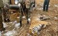 مقابله با شکار غیرقانونی جهانی شد