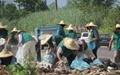 زندانیان گیلان جنگل را پاکسازی کردند