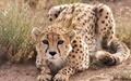 افزایش جرایم شکار غیرمجاز گونههای حیات وحش