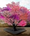 رشد همزمان ۴۰ میوه روی یک درخت
