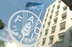 سازمان ملل کمک های غذایی خود را به افغانستان به تعلیق درآورد