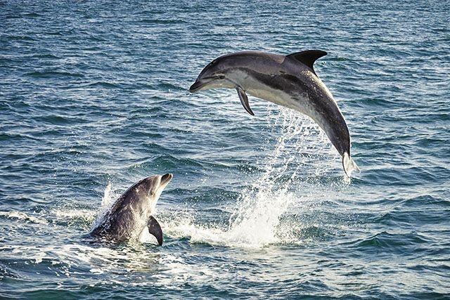 ممنوعیت استفاده از سونار در اقیانوس آرام