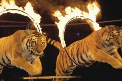 حذف کامل حیات وحش در سیرکها تا پایان امسال