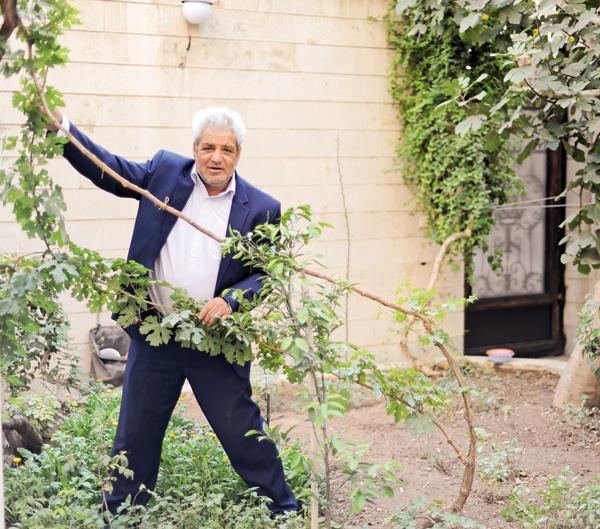 دکتری برای  درختان بیمار شهر