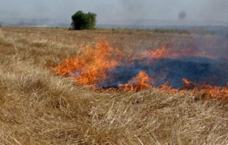برخورد قانونی با کشاورزان متخلف در سوزاندن کاه و کُلش برنج