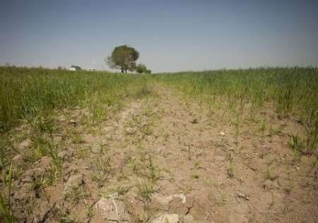 ترمیم زمینهای تخریب شده برای مقابله با تغییرات آب و هوایی