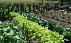 ضرورت یافتن راهکارهای تجاریسازی محصولات ارگانیک در کشور