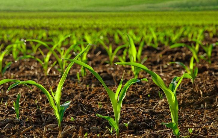 کمک به رشد گیاهان در محیط شور با پروتئینهای جدید