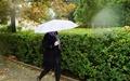 تداوم بارشهای پراکنده