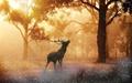 جنگل درونت را قربانی کن