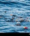 سازمان ملل از غرق شدگان سوری در مدیترانه میگوید
