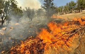 خسارت آتش به ۳هزار متر مربع از اراضی جنگلی صومعهسرا