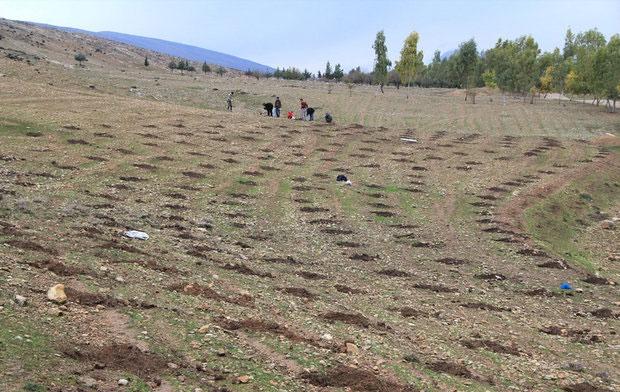 گروه تحقیقاتی نجات جنگلهای بلوط در لرستان تشکیل شد