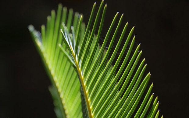 پیشبینی رشد گیاه از روی بذر آن