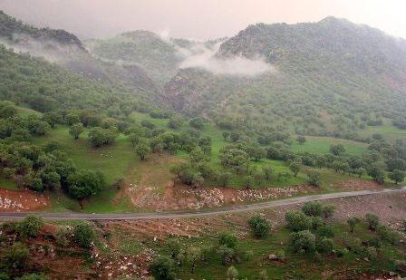 حمایت سازمان ملل از پروژه ملی مدیریت چندمنظوره جنگلهای هیرکانی