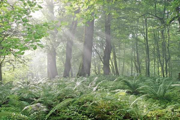 تلاش مجدد ایران برای ثبت جهانی جنگلهای هیرکانی