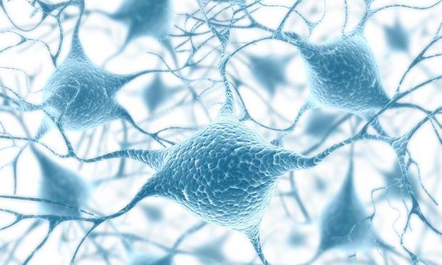 نقشهبرداری از ۳۵ تریلیارد سلول بدن انسان