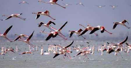 کوچ پرندگان از سیبری به شمال خوزستان