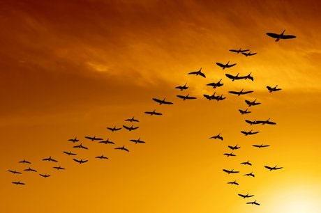 شناسایی ۲۱ سایت فرود پرندگان مهاجر در کرمانشاه