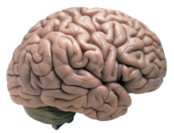 قابلیتهای مغزی نیز مانند پوست پیر میشوند