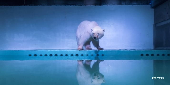 تلاش برای نجات غمگینترین خرس قطبی جهان