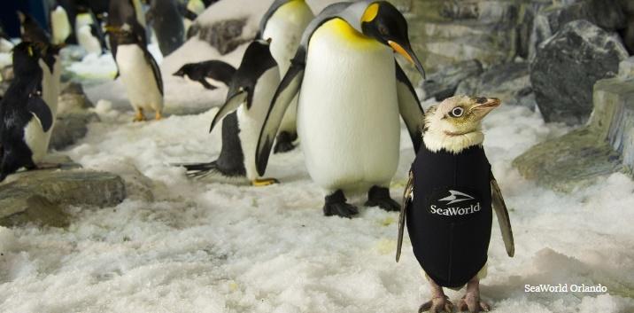 ساخت لباسی مخصوص برای پنگوئن بیپر