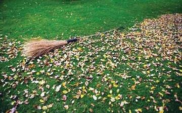 برگهایی که نشانهی پاییزند