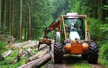 دخالت انسانی علت مهم آفتپذیری جنگلهای شمال