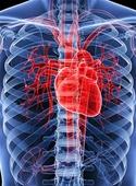 آشنایی با روشهای اندازهگیری ریتم قلب