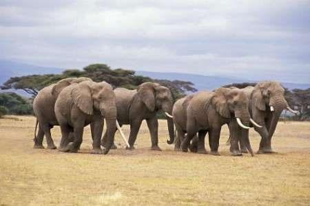 کاهش ۵۸ درصدی جانوران وحشی در ۴۲ سال اخیر