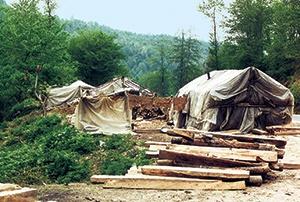 جنگلهای هیرکانی نیازمند مدیریت صحیح همراه با بهرهوری پایدار منطبق با شرایط اکولوژی است