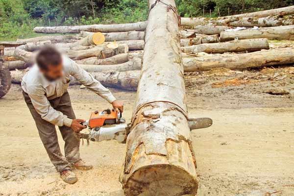 تنفس جنگل ۳میلیارد تومان اعتبار میخواهد