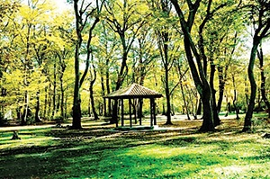 پارکهای جنگلی به شهرداریها واگذار میشود
