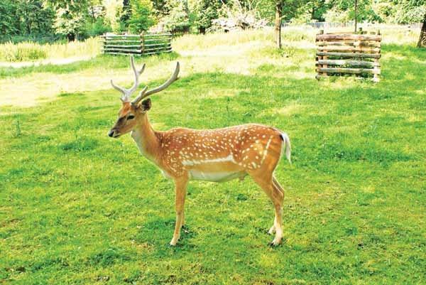 درخواست ازشرکتهای بیمه برای حفظ حیات وحش