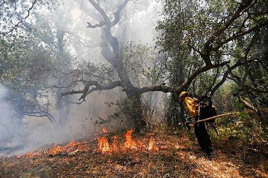۱۰سال حبس برای عامل آتش سوزی منطقه حفاظت شده