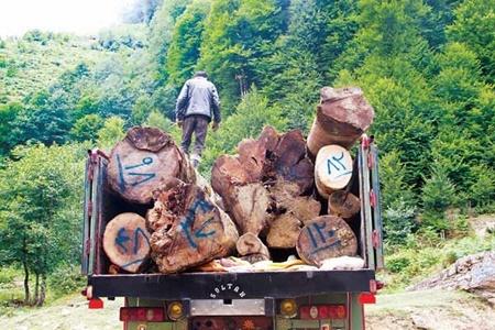 طرح تنفس؛ کمک به تجدیدحیات یا نابودکننده جنگلهای شمال؟